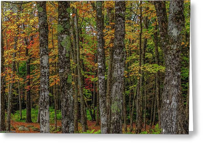 The Fall Woods Greeting Card