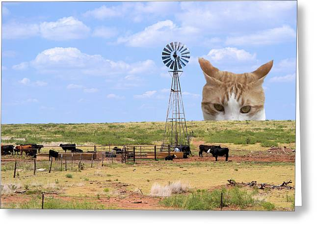 Greeting Card featuring the photograph The Giant Tabby Stalks His Prey by MM Anderson