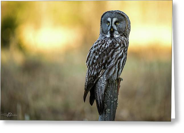 The Great Gray Owl In The Morning Greeting Card