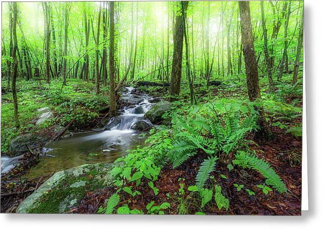 Greeting Card featuring the photograph The Green Forest by Bill Wakeley