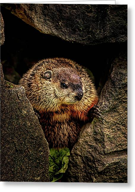 The Groundhog Greeting Card