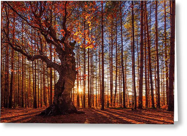 The King Of The Trees Greeting Card