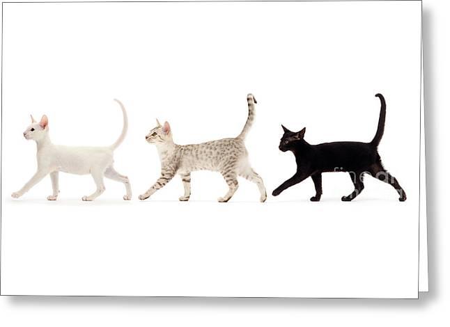 The Kits Parade - Three Greeting Card