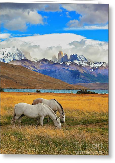 The Landscape In The National Park Greeting Card