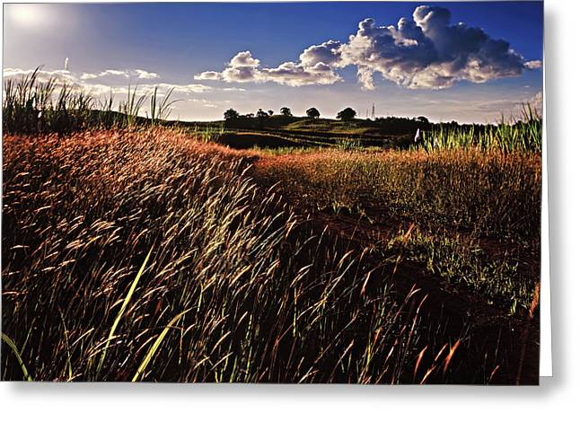 The Last Grassy Field, Trinidad Greeting Card