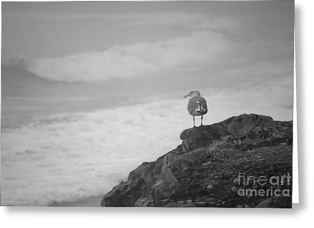 Greeting Card featuring the photograph The Lone Gull by Jeni Gray