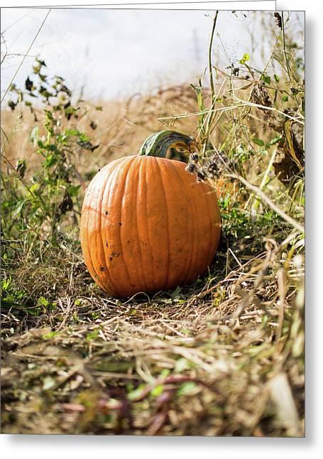 The Lone Pumpkin Greeting Card