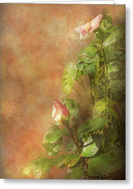 Greeting Card featuring the photograph The Lovely Rose by Mike Savad - Abbie Shores