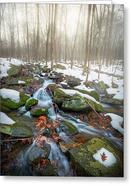 Greeting Card featuring the photograph The November Forest by Bill Wakeley