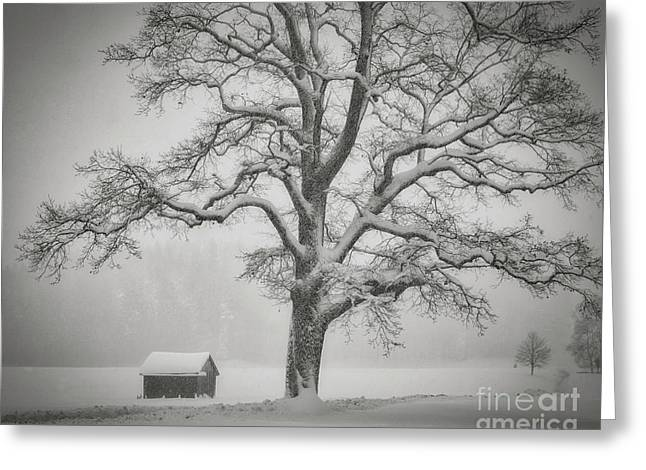 Greeting Card featuring the photograph The Old Oak by Edmund Nagele