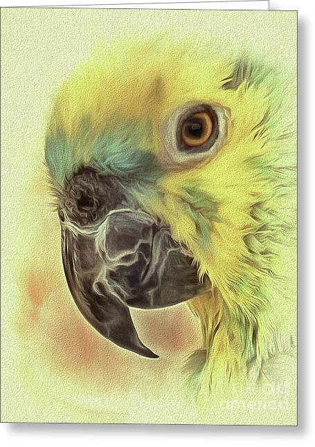 Greeting Card featuring the photograph The Parrot Sketch by Leigh Kemp
