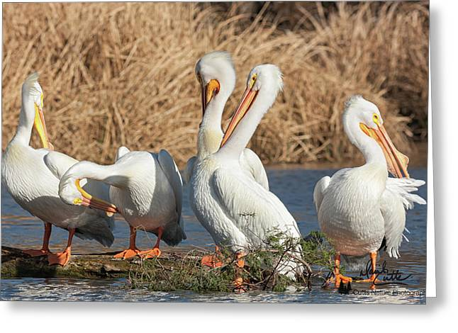 The Pelican Gang Greeting Card