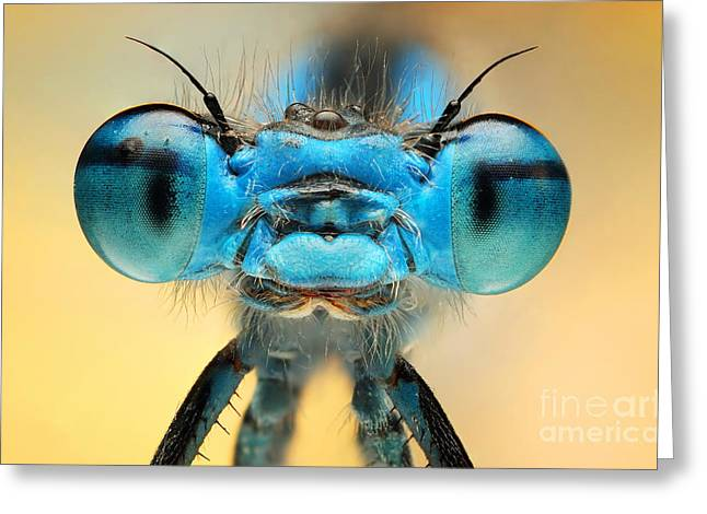 The Picture Shows A Beautiful  Damesfly Greeting Card