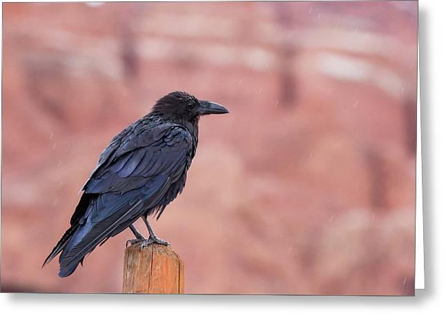 The Rainy Raven Greeting Card