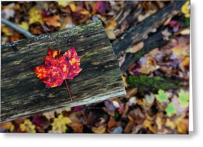 The Reason They Call It Fall Greeting Card