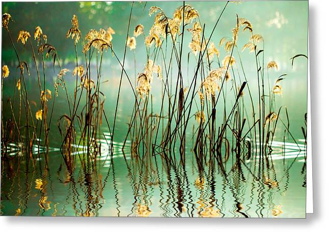 The Reed In The Evening. Tranquil Scene Greeting Card
