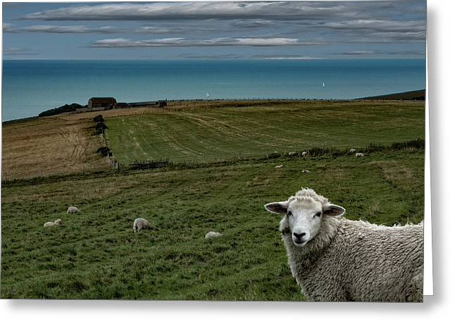 Greeting Card featuring the photograph The Sheep On The Clifftop by Chris Lord
