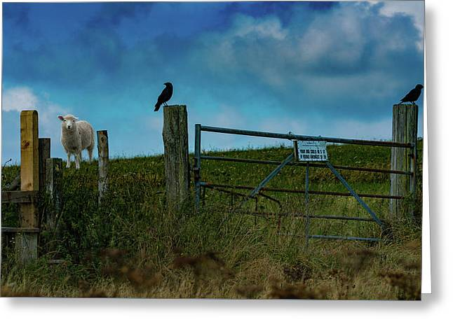 Greeting Card featuring the photograph The Sheep That Hates Dogs by Chris Lord