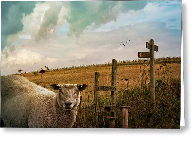 Greeting Card featuring the photograph The Sheep Who Knows Where She's Going by Chris Lord