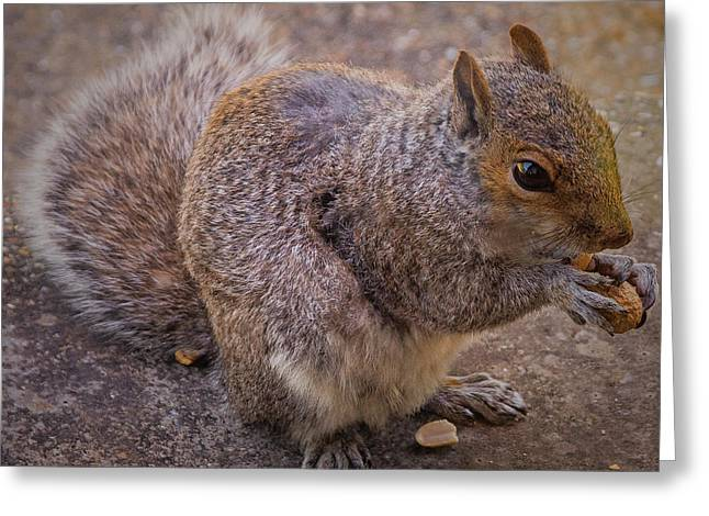 The Squirrel - Cornwall Greeting Card