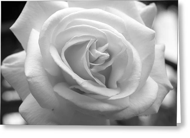 The Subtle Rose Greeting Card