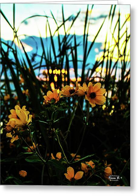 The Sunflower's Sunset Greeting Card