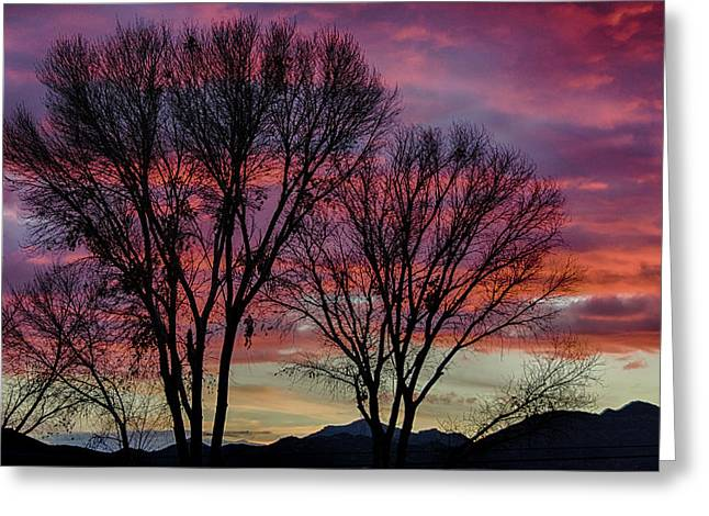 The Trees Know Sunset Greeting Card