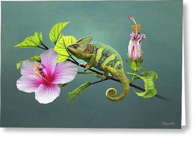 The Veiled Chameleon Of Florida Greeting Card