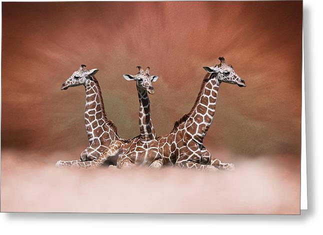 The Watchers - Three Giraffes Greeting Card