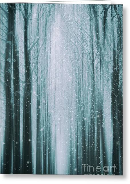 The Winter Wood Greeting Card