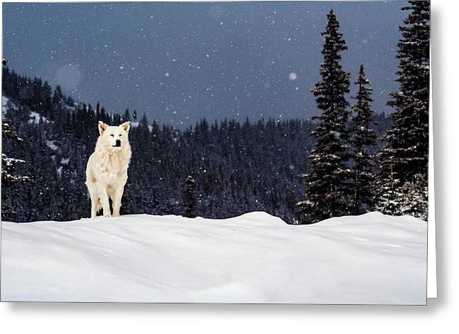 The Wolf Greeting Card