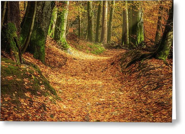 The Yellow Leaf Road Greeting Card