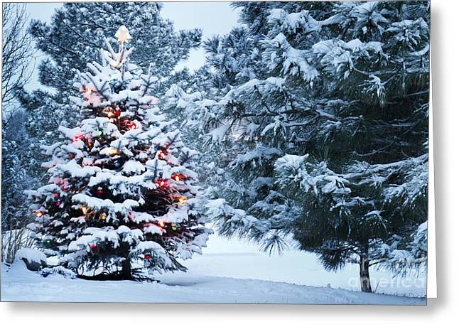 This Snow Covered Christmas Tree Stands Greeting Card