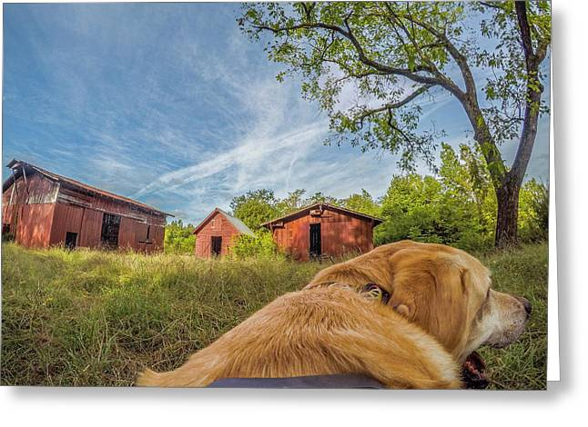 Greeting Card featuring the photograph Thornburg Barns By Photo Dog Jackson by Matthew Irvin
