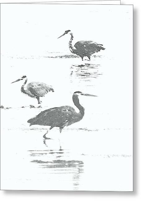 Three Blue Herons Greeting Card