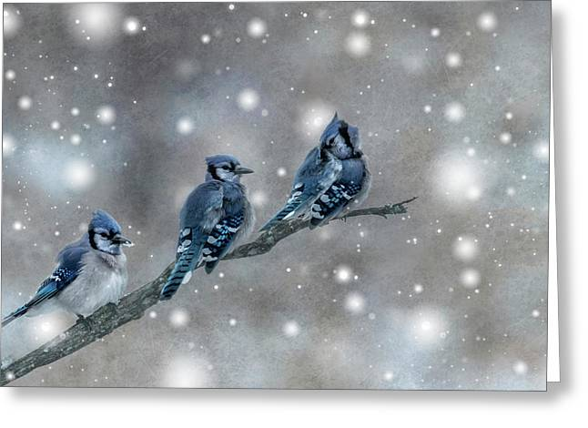 Three Blue Jays In The Snow Greeting Card