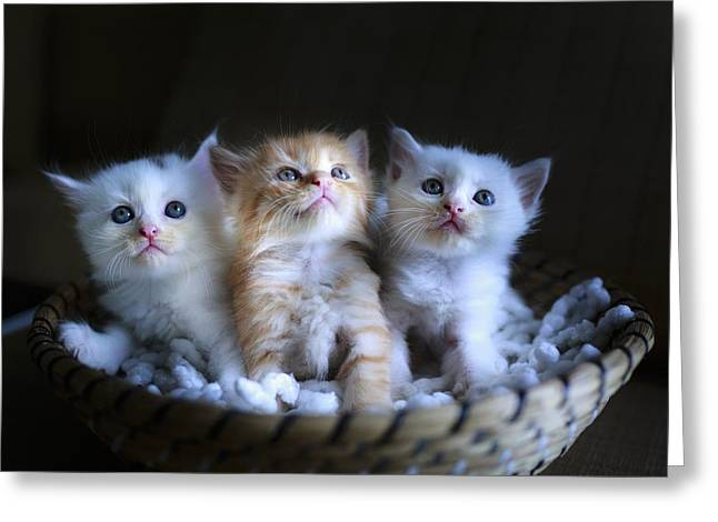 Three Little Kitties Greeting Card