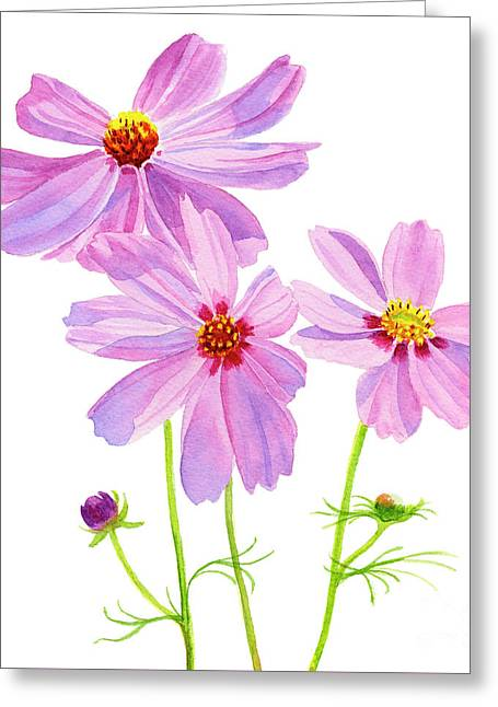 Three Pink Cosmos Blossoms Square Design Greeting Card