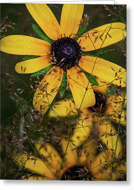 Greeting Card featuring the photograph Through The Meadow Grasses by Dale Kincaid