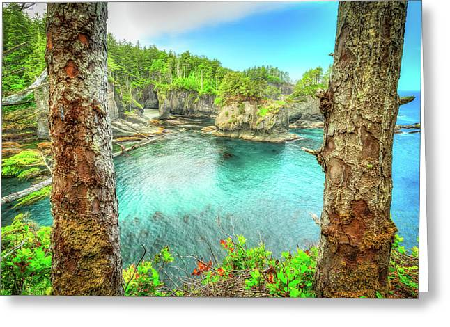 Through The Trees At Cape Flattery Greeting Card