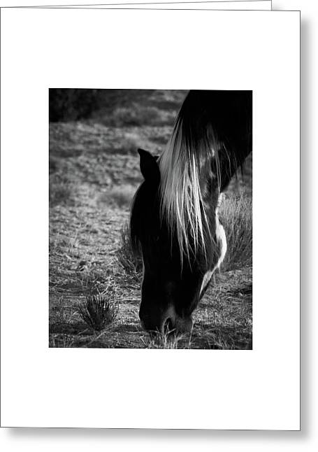 Greeting Card featuring the photograph Tierra by Catherine Sobredo