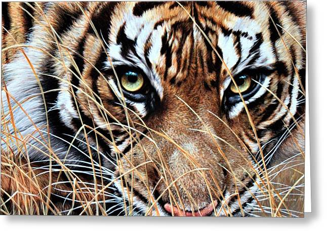 Greeting Card featuring the painting Tiger Eyes By Alan M Hunt by Alan M Hunt