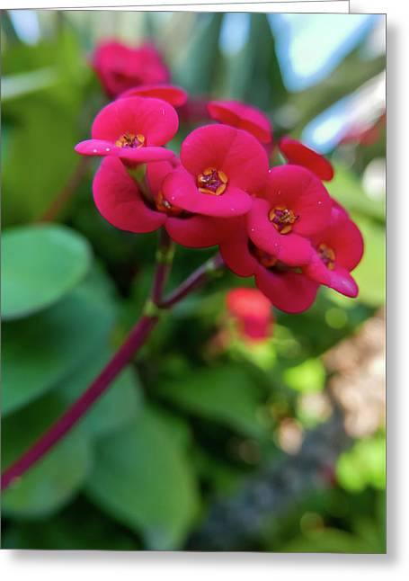 Tiny Red Flowers Greeting Card