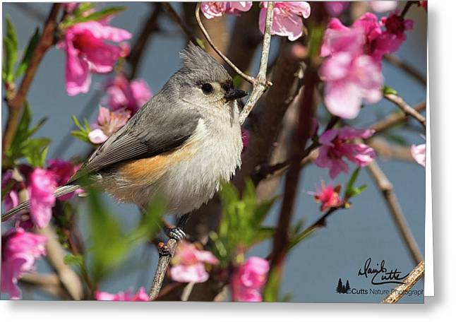 Titmouse And Peach Blossoms Greeting Card