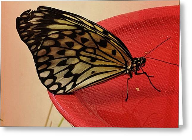 Torn Butterfly Greeting Card