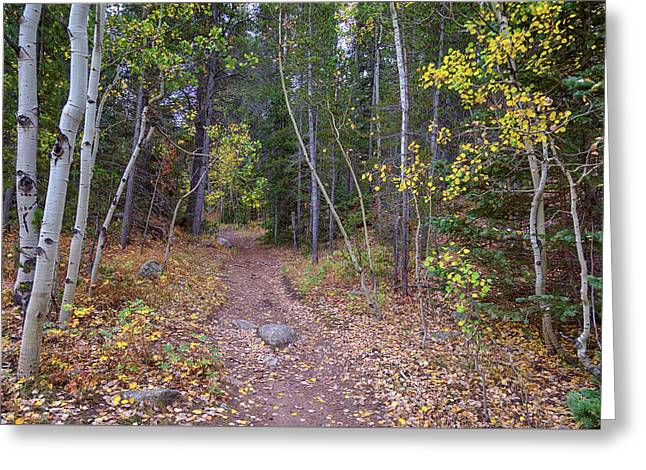 Greeting Card featuring the photograph Trailhead by James BO Insogna