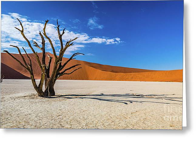 Tree And Shadow In Deadvlei, Namibia Greeting Card