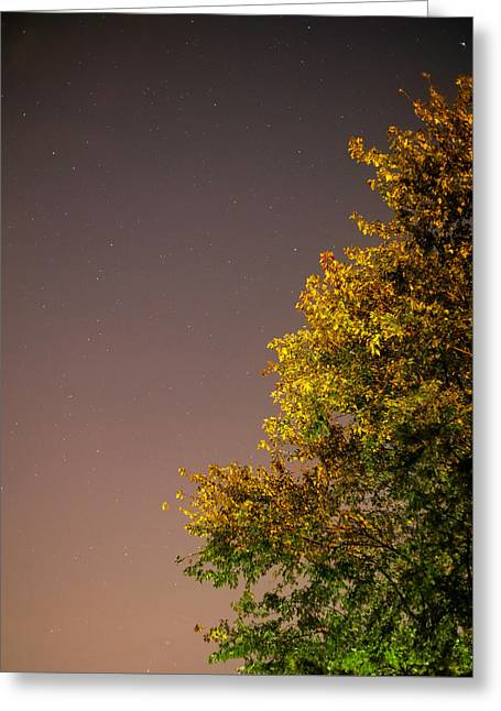 Tree And Stars Greeting Card