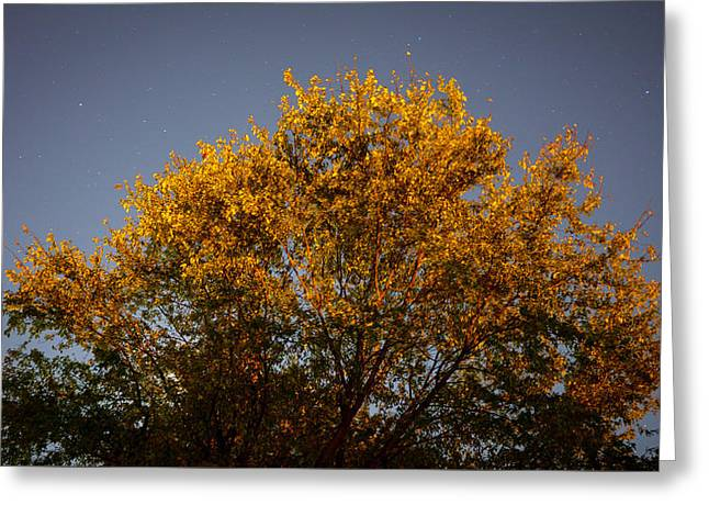 Tree And Stars Wide Greeting Card