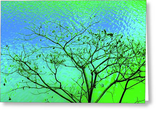 Tree And Water 3 Greeting Card